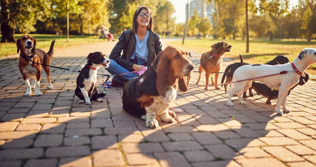 Girl with dogs doing weekend side job