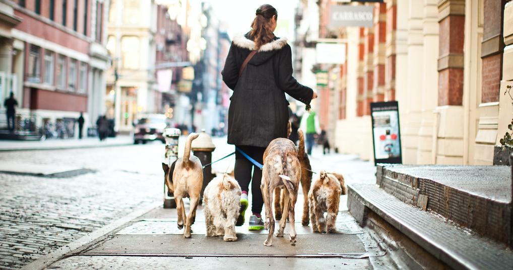 Woman walking dogs as a side hustle