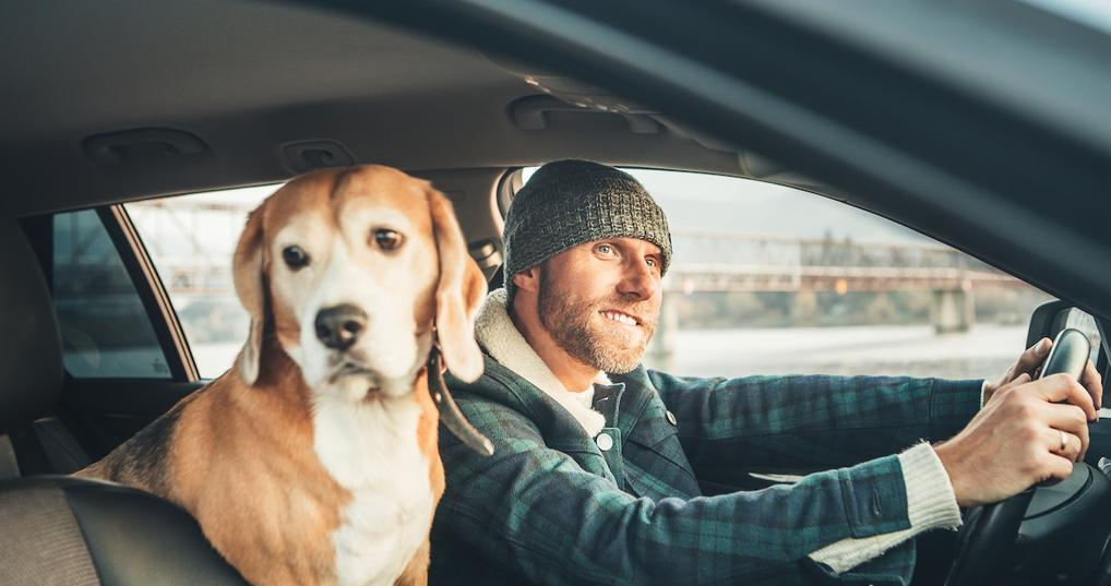 Man with beagle in car