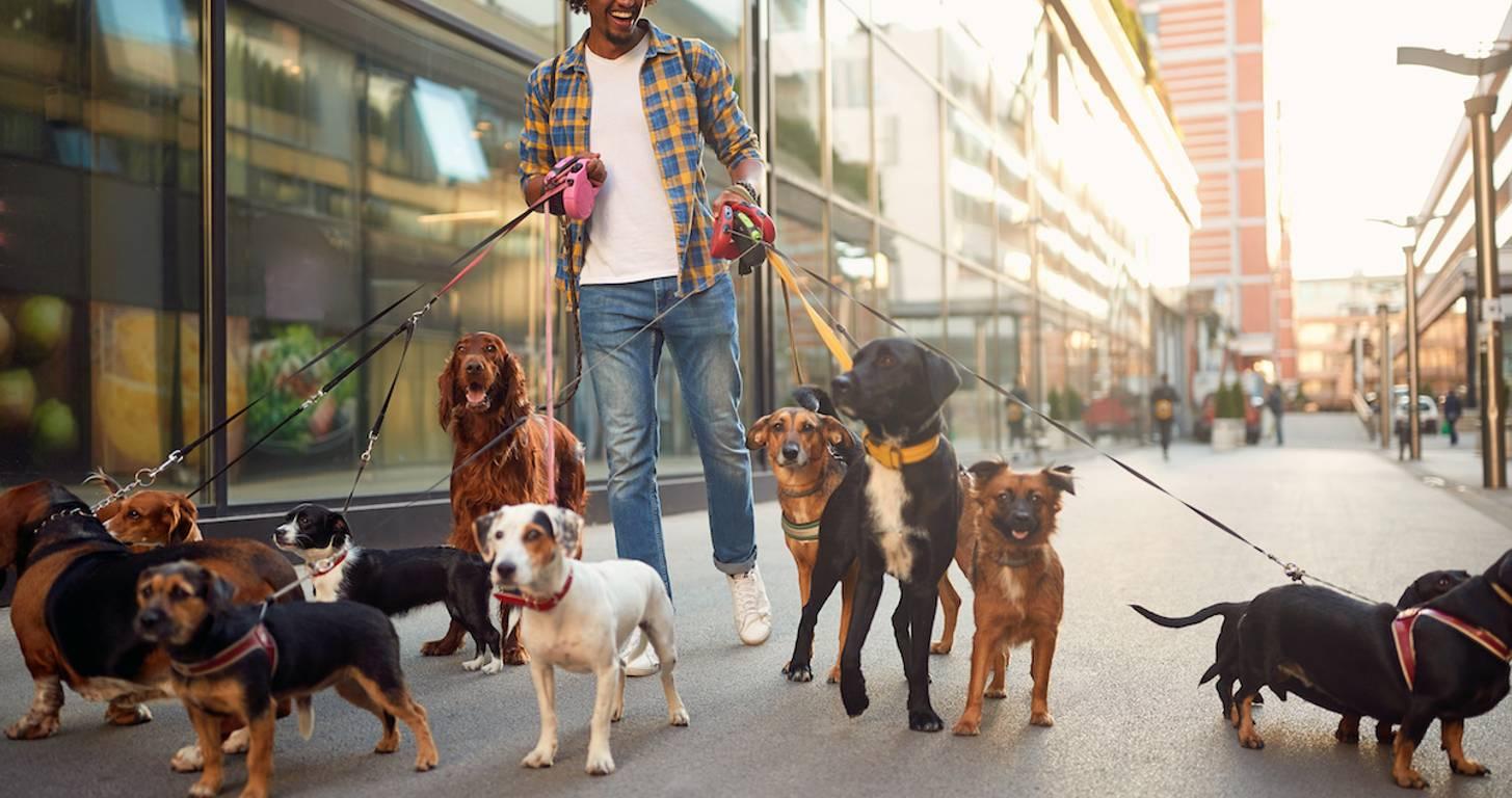 Man walking dogs