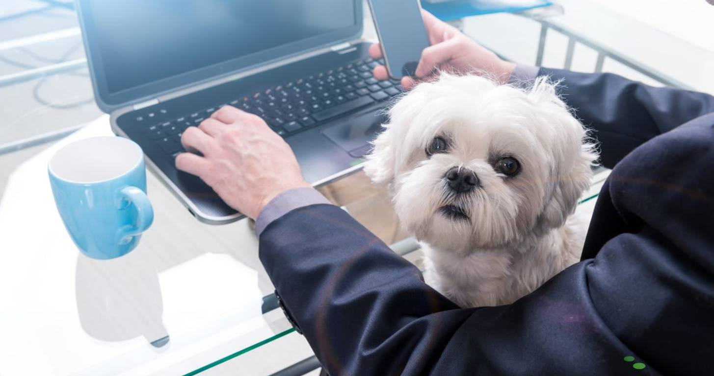11 of the Most Unusual (and Coveted!) Job Benefits