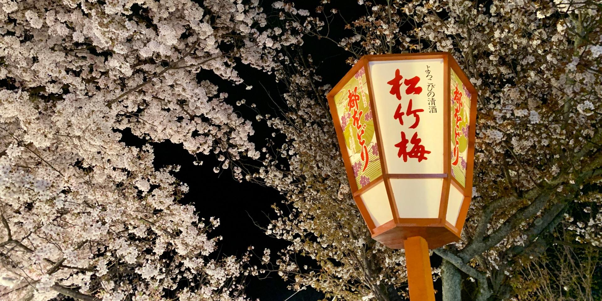 Kyoto Cherry Blossoms Zoom Background