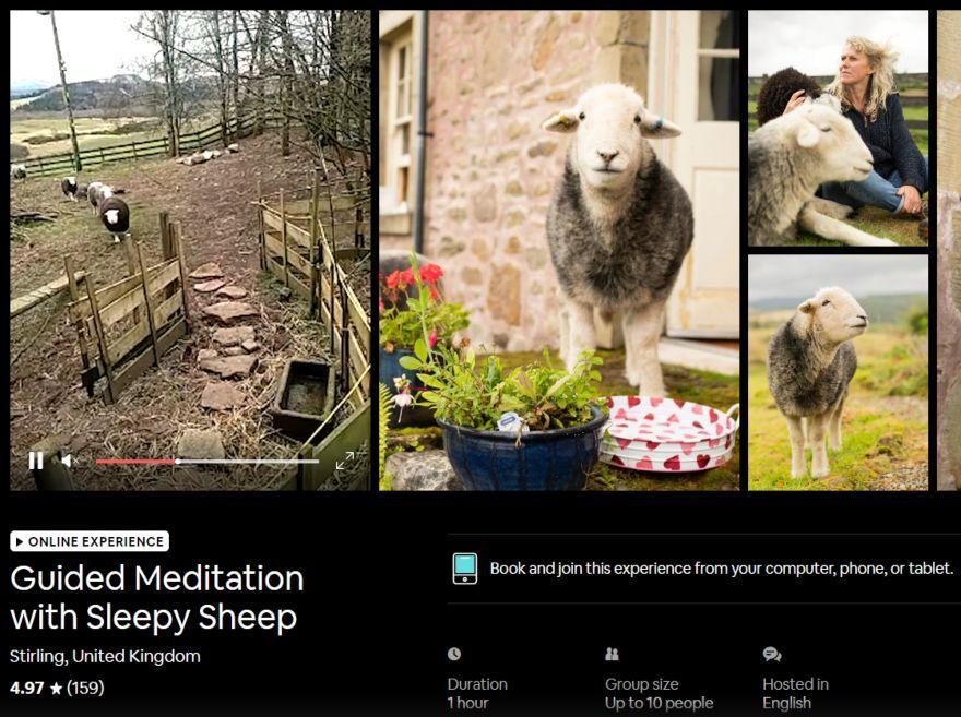 Sheep meditation