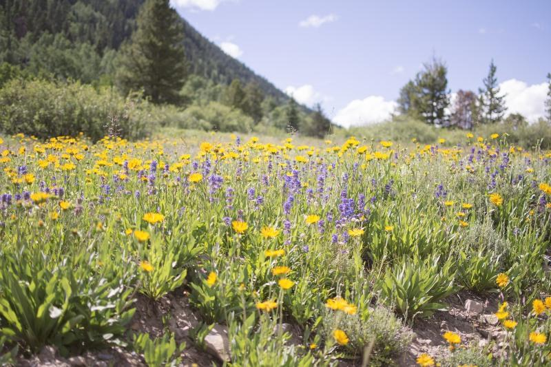 15 Jaw-dropping Places to View Spring Wildflowers in the U.S.